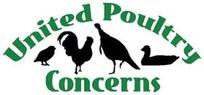 Kaporos & the Chicken Industry