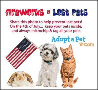 Lost Dogs (& Cats): Your Pets Versus 4th of July Fireworks