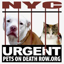 Urgent Pets on Death Row