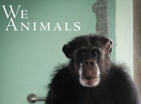 We Animals Project