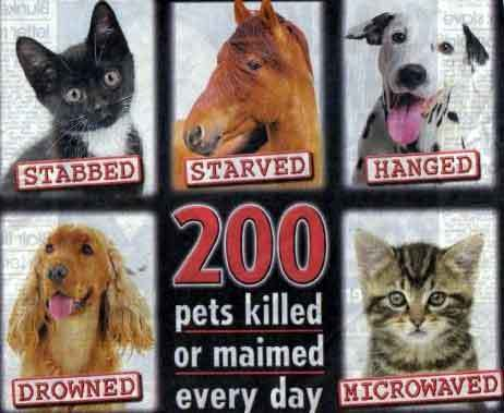 Stop animal cruelty against animal cruelty 7968325 462 379
